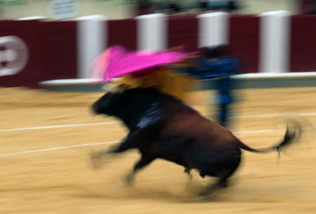 The final minutes of this bull's life, starts with the flourishes of a cape.